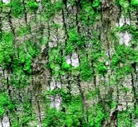 Mossy tree bark 36