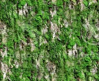 Mossy tree bark 31