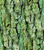 Mossy tree bark 32