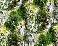 Mossy tree bark 25