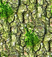 Mossy tree bark 11