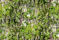 Mossy tree bark 34