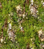 Mossy tree bark 14