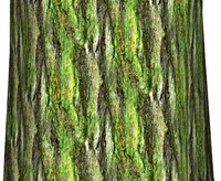 Mossy tree bark 12