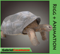3d model galapagos-tortoise animation