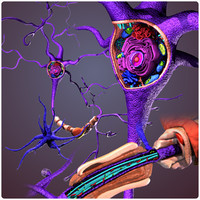 neuron cell structure 3d model