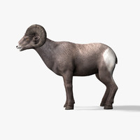 3d model bighorn sheep