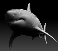 3d model realistic zbrush great white