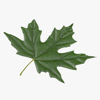 green maple leaf 3d c4d