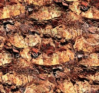 Palm tree bark 23