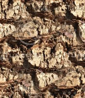 Palm tree bark 5