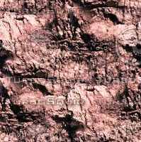 Palm tree bark 17