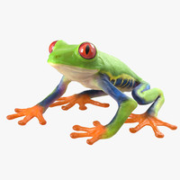 3d red eyed tree frog model