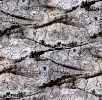 Palm tree bark 31