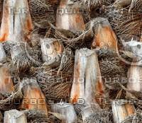Palm tree bark 35