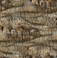 Palm tree bark 50