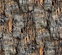 Palm tree bark 36