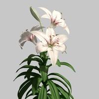 lilies 3d model