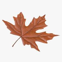 orange maple leaf max
