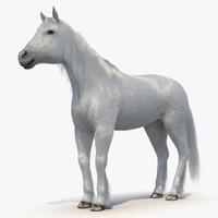 white horse fur 2 3d model
