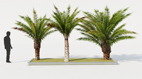 3d model of palm tree set
