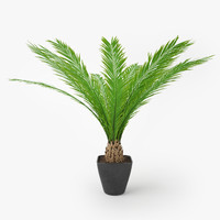 palm tree pot 3d max