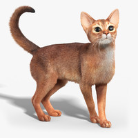 Abyssinian cat(FUR)(RIGGED)