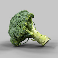 photorealistic broccoli obj