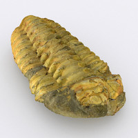 3ds max trilobite