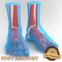 foot anatomy 3d 3ds