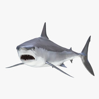 shortfin mako shark pose 3ds