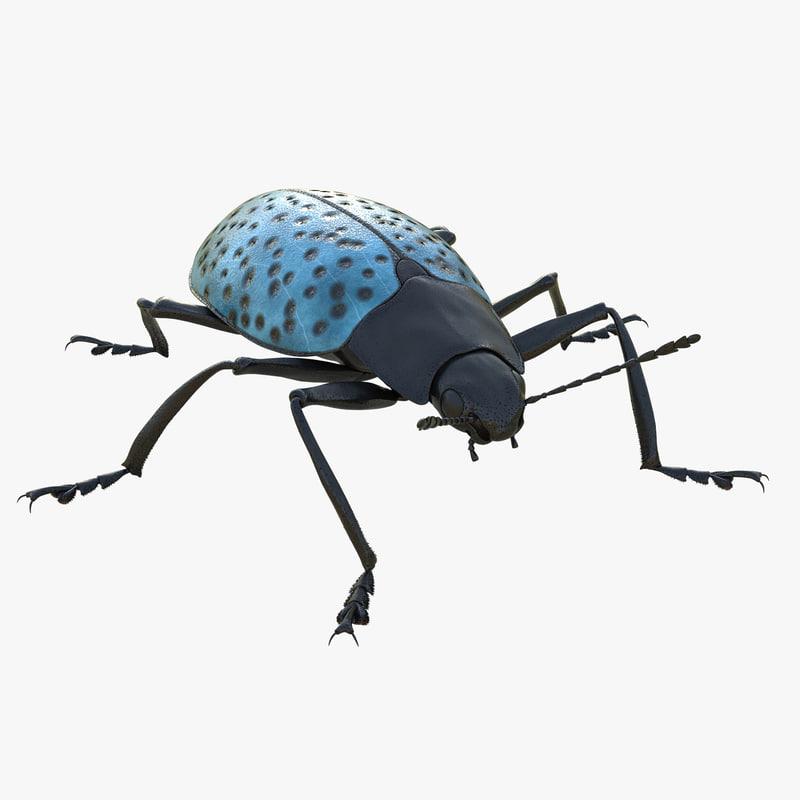 Gibbifer Californicus Beetle 3d model 00.jpg