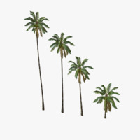 3d model coconut palm trees