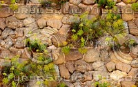Stone wall with vine 8