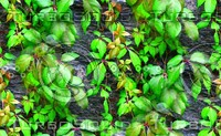 Stone wall with vine 12