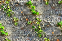 Stone wall with vines 4