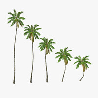 coconut palm trees 3d model