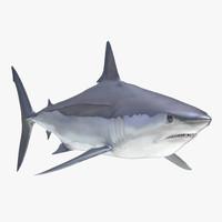 shortfin mako shark 2 3d c4d