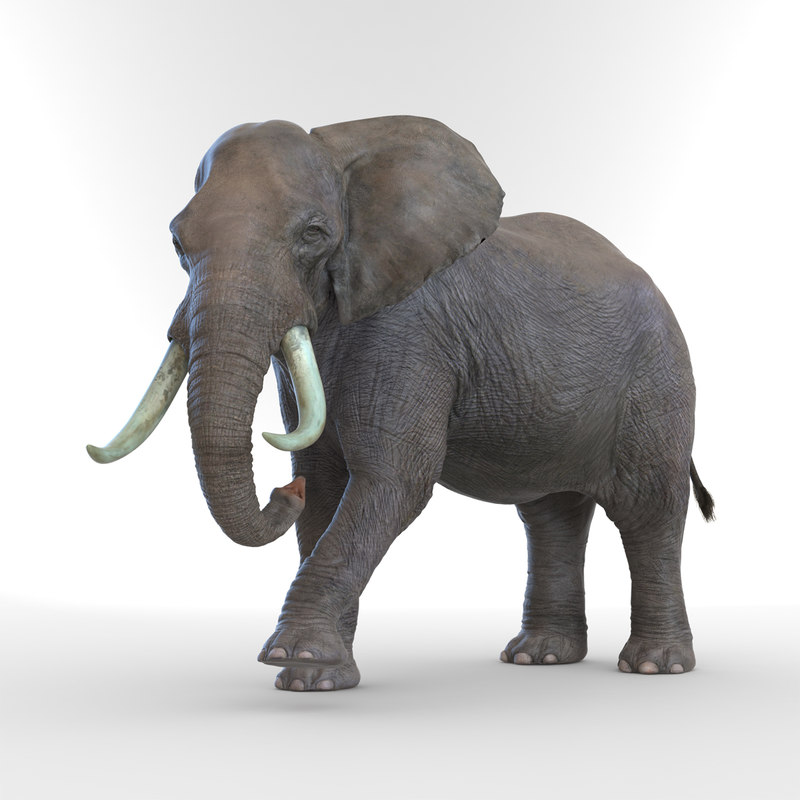 Elephant Rigged 3d model 01.jpg