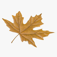 max yellow maple leaf