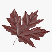 red maple leaf max
