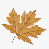 3d model yellow maple leaf