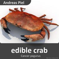 realistic edible crab 3d model