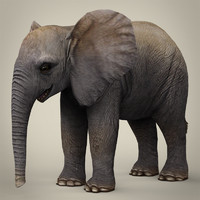 3d realistic baby elephant