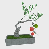 bonsai apple tree max