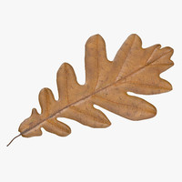 max yellow oak leaf