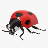 3d ladybug lady bug model