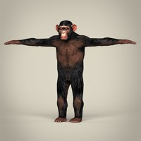 3d realistic chimpanzee model