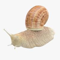 3d model of snail 02