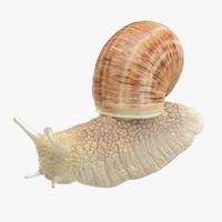 snail 03 3d model